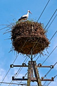 Stork in nest on electricity pylon at Mazury, Poland, low angle view