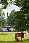 View of village Wojnowo in Warmia-Masuria Masuria near Mikolajki, Poland