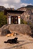 Prayer wheels at Tiegernest Taktsang Monastery, Bhutan