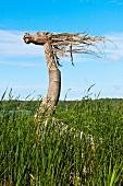 Animal shaped sculpture in grasses of Galindia Mazurski Eden, Warmia Masuria, Poland