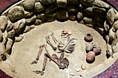View of skeleton in Nubia Museum at Aswan, Egypt