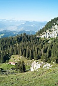 View of pine trees and rock mountains at Spitzstein, Chiemgau, Bavaria, Germany