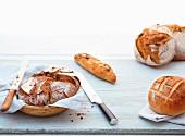 Stillleben mit verschiedenen Broten