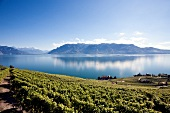 Genfer See, Kanton Waadt, Chenaux, Waadtländer Alpen, Weinberge Lavaux