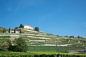 Landscape of Lavaux vineyard, near lake Geneva, Switzerland