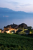 View of Epesses at evening light, Alps, canton of Vaud, Lake Geneva, Switzerland