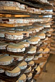 Ripening of Swiss cheese Vacherin Mont-d'Or