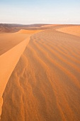 Wüste, Wahiba Sands, Abendsonne Oman, Sand, Landschaft, Übersicht