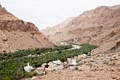 Oman, Wadi Shab, Tal, Dorf, Palmen, Grün, Bäume, Canyoun
