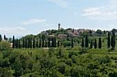 Blick auf Oprtalj, viele Bäume, grün, Istrien, Kroatien