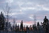 Lappland, Landschaft, verschneit, Sonennuntergang