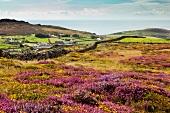 Rolling landscape at Aberdaron. Llyn Peninsula, West Coast, Wales, Atlantic
