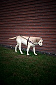 Aarhus, Blindenhund, Wiese, Wand, Skulptur vor dem Aros