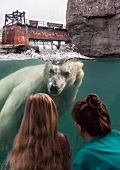 Women watching Polar Bear in water at Zoo Hannover in Yukon Bay, Hannover, Germany