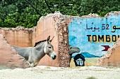 Somali wild ass in Hanover Adventure Zoo, Hanover