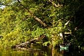 Uckermärkische Seen, Krueselin See, abendlich, Boot,  Bäume, Ufer