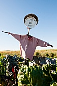 Scarecrow on farm, Frankenhausen, Hesse, Germany