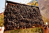 Beehive frames in Witzenhausen Freudenthal at Hessen-Kassel
