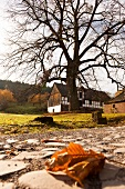 View of bare tree and house with dried leaf in foreground, Kassel, Witzenhausen, Germany