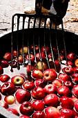 Red apple with pan fork at Hesse, Hofmosterei Ellershausen