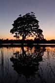 View of landscape at dusk, Basawak Kulama, Anuradhapura, Sri Lanka