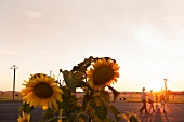 Berlin, Tempelhofer Feld, Garten, Berliner, sommerlich, Abendsonne