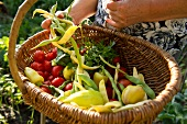 Close-up of woman holding basket with vegetables in Intercultural Garden, Berlin