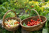 Baskets of tomatoes and vegetables in garden, Berlin