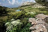 View of Spil Dagi National Park in Aegean, Turkey