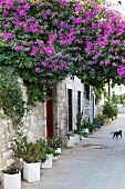 View of purple flowered trees and building in Bodrum Peninsula, Aegean, Turkey