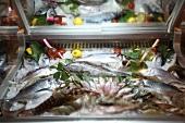 Fresh fish counter in fish market, Bodrum Peninsula, Aegean, Turkey
