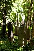 View of graves in Jewish Friedhof in Pankow, Berlin