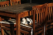 Cat lying on wooden chair at Edremit, Turkey