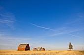View of farmer's house, Saskatchewan, Canada