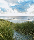 View of sea and grasses on beach at North Sea coast of Jutland, Jutland, Denmark