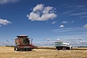 Trucks and harvester at cornfield, Saskatchewan, Canada
