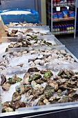 Fresh oysters in St. Lawrence market, Toronto, Canada