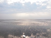 View of mudflats at Wadden Sea of Spiekeroog, Lower Saxony, Germany