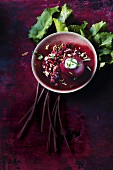 Beetroot with sour cream jelly and pomegranate seeds