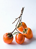 Persimmons on Branch