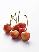 Winter Cherries on White Background
