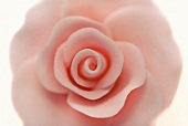 Pink Gum Paste Rose; Close Up