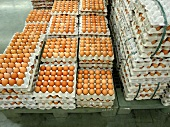 Brown eggs in egg trays in a supermarket
