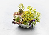 A bowl of wild herb flowers