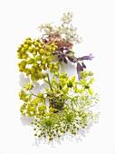 Wild herb flowers