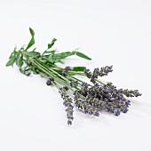 Bouquet of lavender (Lavendula Angustifolia)