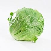 An iceberg lettuce