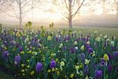 Blumenbeet mit Frühlingsblumen im Morgenlicht