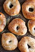 Homemade Salt Bagels