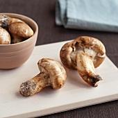Wild Matsutake Mushrooms Harvested in Maine
